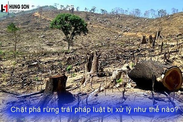 Hành vi chặt phá rừng trái pháp luật bị xử lý như thế nào?