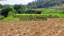 Thủ tục chuyển đổi từ đất trồng lúa sang đất trồng cây hàng năm