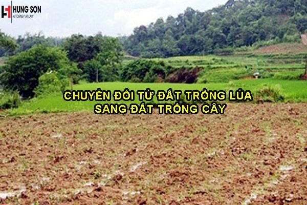 chuyển đổi đất trồng lúa sang đất trồng cây hàng năm