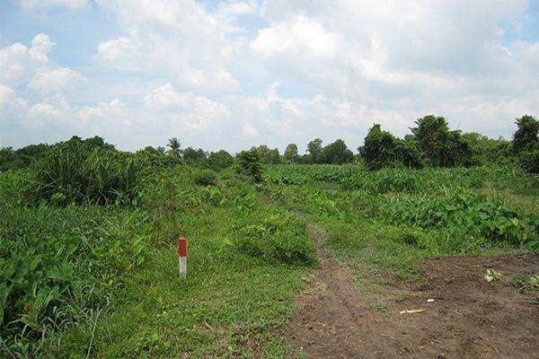 Đất khai hoang được cấp sổ đỏ khi đáp ứng điều kiện tại khoản 2, Điều 101 Luật Đất Đai năm 2013
